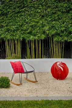 black bamboo hedge - Google Search