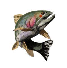 1000+ images about superior trout oil on Pinterest   Trout ...