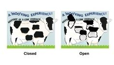 Make a Science Fair Project about Cow's Digestive System and Process: Animal Science Poster Ideas for Kids Ag Science, Animal Science, Digestive System For Kids, Cow Stomach, Cow Craft, Fantastic Mr Fox, Science Fair Projects, 4 H, Kids Education