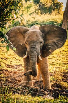 What kind of animals will you see on an African safari? We answer this question with a brief overview of all the most popular animals to see while on safari Amazing Animals, Majestic Animals, Animals Beautiful, Safari Animals, Funny Animals, Cute Animals, African Animals, African Safari, Animals Crossing