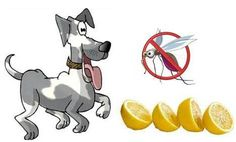 Ottawa Valley Dog Whisperer : Lemon – A Safe, Natural Mosquito Repellent for Dogs
