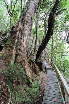 Hiking around Cradle Mountain in Tasmania, Australia