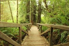 Redwood National Forest, California 32 Reasons why California is the Most Beautiful