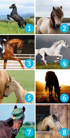 Which photo of a horse do you enjoy the most? Number Games, Psychology, Personality, Lion Sculpture, Told You So, Horses, Statue, Humor, Animals