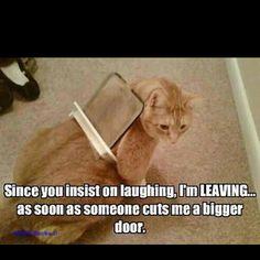 Clyde?!?!