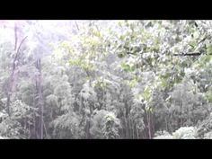 Relaxing Sounds of Rain in Woods (Pure Rain, 60Mins) - The Sounds of Nature 12 - YouTube