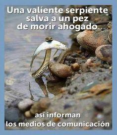 Medios de comunicacion #Viñeta #Humor