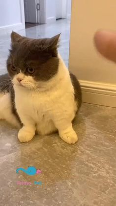 Funny Cute Cats, Cute Baby Cats, Cute Little Animals, Cute Funny Animals, Kittens Cutest, Cats And Kittens, Cute Dogs, Cute Animal Photos, Cute Animal Videos