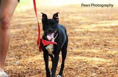 Meet Spunky-Sprout, our Adoptable Dog of the Week from Adoptapet.com. This young lady is a Whippet and Hound mix from Miami, FL. She's already spayed, housetrained, up to date with shots, good with kids, and good with dogs.