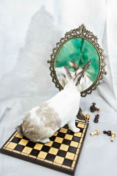 Animals Rescued From Labs Become Magic Models In Alice-In-Wonderland Photoshoot | Bored Panda