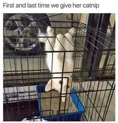 Spider Cat, Hang In There!