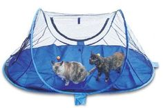 Wildwhiskers Outdoor Feline Funhouse Funhouse Pad Combination -- Continuously the item at the photo link. (This is an affiliate link). Cat Lover Gifts, Cat Gifts, Cat Lovers, Outdoor Cat Enclosure, Cat Cages, Cat Run, Outdoor Cats, Pet Supplies, Pets