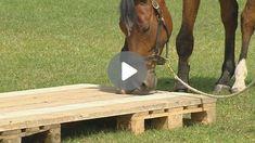 Zirkusschule Teil 2: Stillstehen & freies Rückwärtsrichten Round Pen, Natural Horsemanship, Video Stream, Stress, Flooring, Far Away, Elementary Education, Studying, Wood Flooring