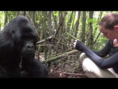 Chill with Gorilla's at Volcanoes National Park, Rwanda.