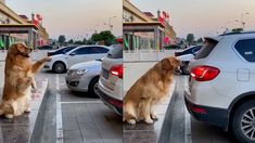 Parking Space, Dogs Golden Retriever, Cute Gif, Funny Dogs, Pets, Youtube, Videos, Youtubers, Youtube Movies