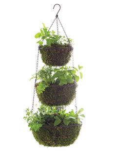 I just have to share this smart project from Martha Stewart Living's June 2013 issue: a three tier hanging herb planter. Even if you have a small outdoor space you can still grow plenty of herbs. I can even see this in a sunny window indoors, given the baskets are lined with a little plastic first. From Good Things | ...