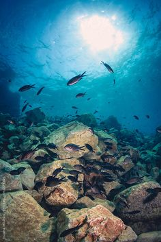 Mediterranean sea underwater  by Jovana Milanko