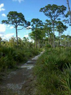 Jonathan Dickinson State Park (JDSP) in Hobe Sound, FL