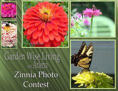 Zinnia Photo Contest
