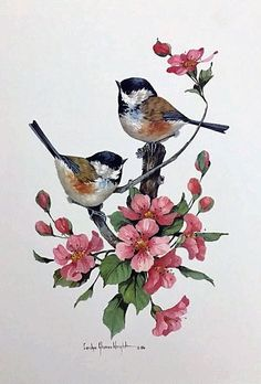 Chickadees is a 14 x 11 lithograph licensed from on an original watercolor by Carolyn Shores Wright. The image is one of many featuring birds and flowers she has painted over the years. Art Watercolor, Watercolor Flowers, Watercolor Portraits, Watercolor Landscape, Vogel Silhouette, Bird Drawings, Bird Pictures, Vintage Birds, Bird Art