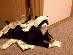 newosx:  officialsmashmouth:  this is the money cat. she only...