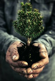 Human Hand and tree - Environmental Conservation. Parts Of The Earth, Arbour Day, Keep Alive, Grain Of Sand, Photo Tree, Flowering Trees, Image Now, Cool Pictures, Royalty Free Stock Photos