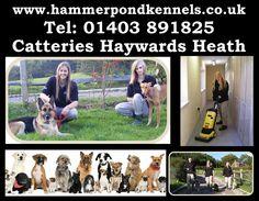For more info only log on: http://www.hammerpondkennels.co.uk/nav/kennels