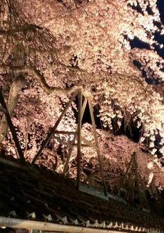 十輪寺の夜桜★
