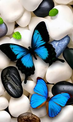 LI LOYE DIY Diamond Embroidery Blue butterfly stone Picture Of Rhinestone Cross-Stitch Kit Diamond Mosaic Diamond Painting Most Beautiful Butterfly, World's Most Beautiful, Beautiful Things, Beautiful Bugs, Nice Things, Beautiful Images, Random Things, Animal Wallpaper, Iphone Wallpaper