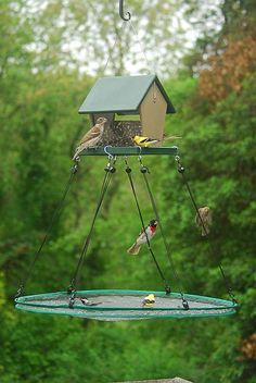 Recycled Plastic Small Hopper Bird Feeder With Sloped Tray & Seed Hoop 16 Inch Seed Catcher at Songbird Garden