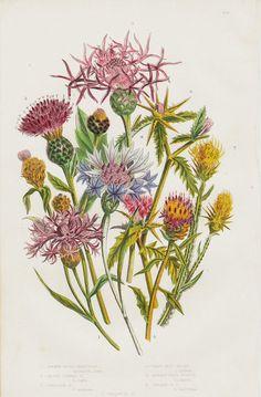 1872 Antique FLOWER print chromolithograph by TwoCatsAntiquePrints, $16.00