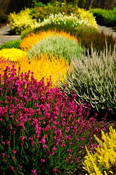 30,000 U.S. gardeners voted their Top 5 flowers. Can you guess what they are? #Garden