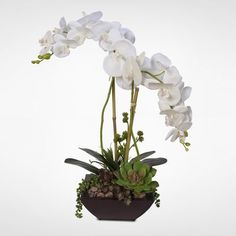 Latitude Run Handmade Phalaenopsis Silk Orchids with Succulents Floral Arrangement in Planter