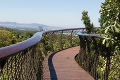 Kapstadt Sehenswürdigkeiten Kirstenbosch Boomslang Baumwipfelpfad