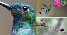 Admira+la+belleza+de+los+colibríes+en+estas+imágenes