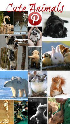 Pics of very young chicks, pornosexonline