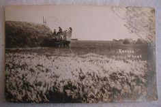 Vintage postcard, Kansas wheat field  harvest. www.onlineauction.com