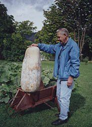 """*WORLDS LARGEST GOURD *GIANT ZUCCA GOURD*7-seeds*#1175* by ROBsRAREandGIANTseeds. $1.99. EASY TO GROW. RARE. Average size was 60 to 100 lbs with the Record being 150 pounds!!!!. *Giant Zucca gourds are prized by crafters *. Exra-large, unique, long, tapered hardshell gourd. About 24 to 46"""" long.. **I LOVE plants that can be neglected and still thrive well...  *Giant Zucca Fruit Type - L. siceraria Average Weight - 50 lbs.& up!!!!. Plant Type - Vine Maturity - 1..."""
