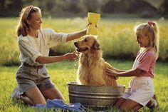 Cómo bañar a tu perro en casa: cuidados y nombres para tu mascota. Bañar a mi perro
