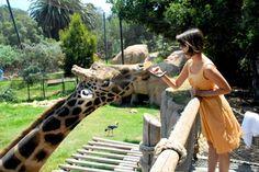 Feed a giraffe. check- at the mountain zoo near Colorado Springs