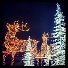 Stockholm this Christmas