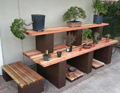 Picture #4 - Now, my bonsai display bench is finished! My pre-bonsai have their home. I added two shelves under the bench for pots and misc. storage. I wanted to utilize the dead space under the bench. 3/17/16