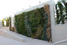 Casas Ibáñez Patio, Sidewalk, Plants, Vertical Gardens, Cement, Walls, Buildings, Green, Creativity