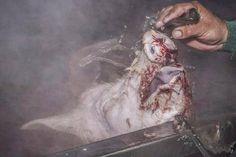 """According to slaughterhouse worker, Tommy Vladak, """"After they left me, the hogs would go up a ramp to a tank where they're dunked in 140° water. By the time they hit the scalding tank, they're still fully conscious. """" These hogs get up to the scalding tank, hit the water, and start kicking and screaming… There's a rotating arm that pushes them under. I am not sure if they burn to death before they drown, but it takes them a couple of minutes to stop thrashing."""""""