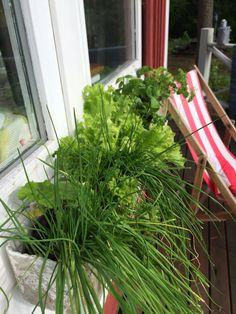 Ikkunapuutarha Herbs, Plants, Herb, Plant, Planets, Medicinal Plants