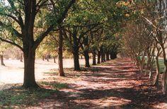 colonnade | norfolk va Norfolk Virginia, Location Scout, Love Can, Virginia Beach, Far Away, Southern California, Savannah Chat, Country Roads, Movie
