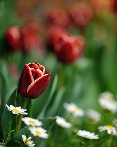 prettylittleflower:    Spring flowers (by myu-myu)