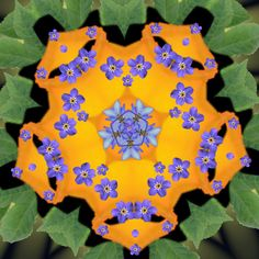 Flower Mandala | Digital Flower Mandala Free Stock Photo - Public Domain Pictures