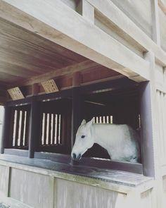 神様に仕える馬、神馬。美しい。#しんめ Horses, Instagram Posts, Animals, Animales, Animaux, Horse, Words, Animal, Animais