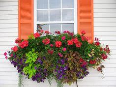 The Impatient Gardener: How to plant a rockin' window box